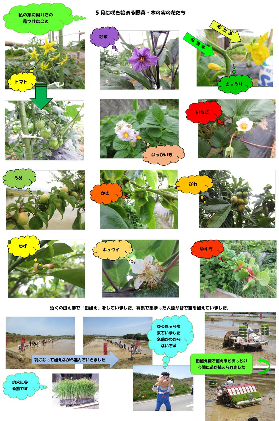 5月に咲き始める野菜・木の実の花たち