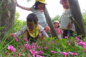 かわいい好きな色の花をみつけ!